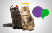The Great Cat Debate Promotion